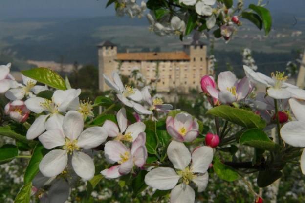 fiori-di-melo-fiorinda-trentino-valdinon-relax-benessere-fioritura_melinda-valdinon2