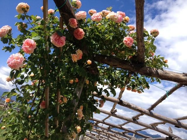 In arrivo un week end super qui con noi - Il giardino delle rose ...