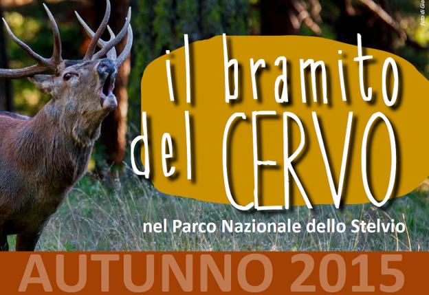 il bramito del CERVO nel Parco Nazionale dello Stelvio