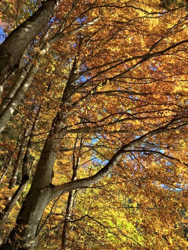 Tovel Foliage