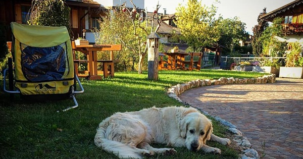 cani-al-pineta-hotels