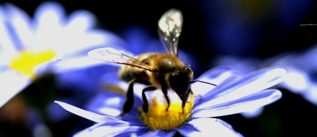 magiche sfumature di api