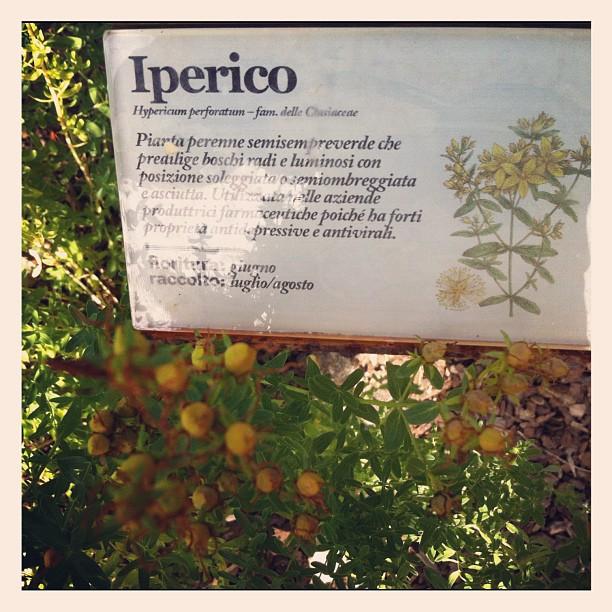 giardino botanico del  Pineta