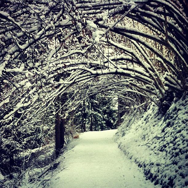 nordic Walking sula neve