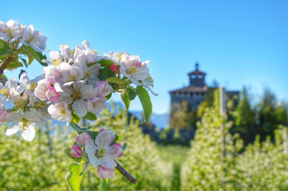 Casetel Nanno tra i meli in fiore