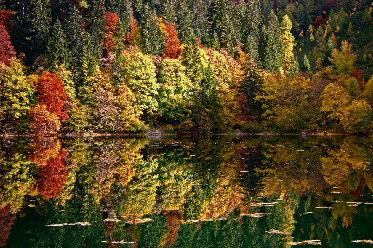Foto dello spettacolo del foliage in autunno al lago di Tovel... una delle più incredibili meraviglie della Val di Non!!! (immagine da pinterest.com)