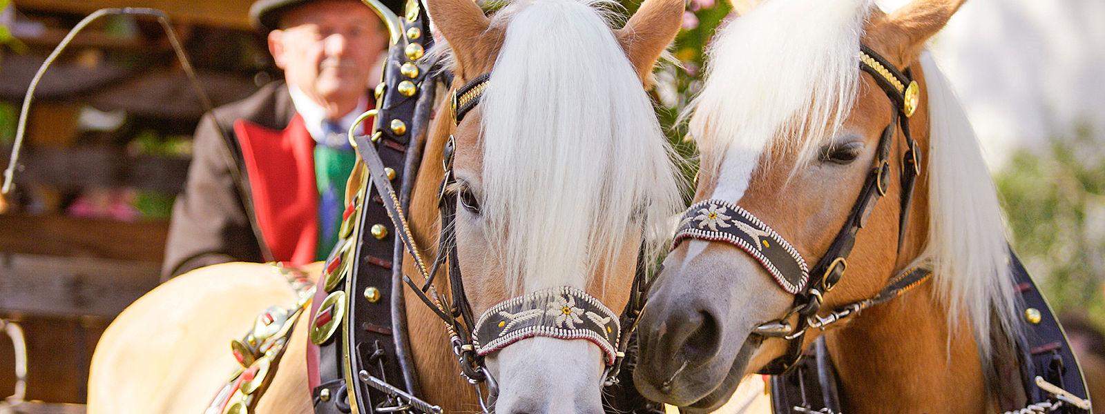 Pasqua 2020 trentino alto adige vacanza eventi e sagre for Cavalli bolzano