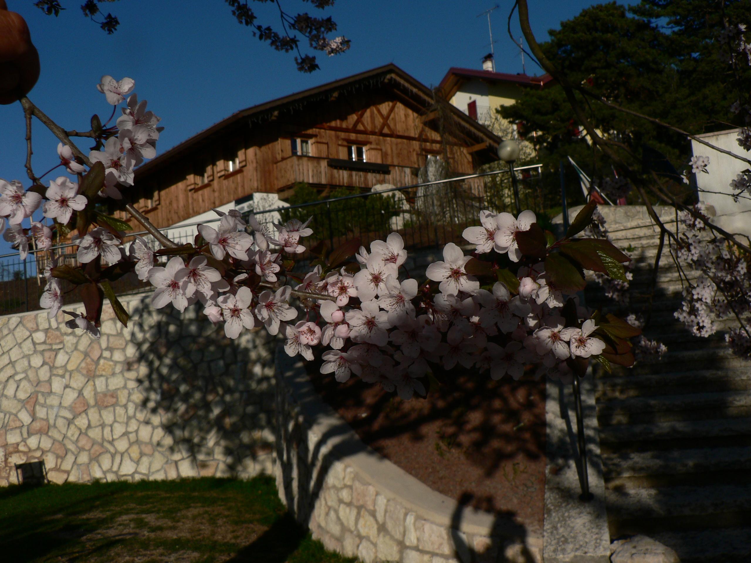 Il Pineta in primavera vi accoglie con fiori di tutti i tipi