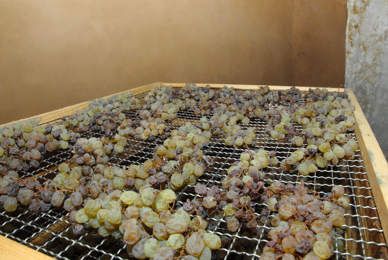 Appassimento delle uve in preparazione per diventare vinsanto (CCIAA Trento)