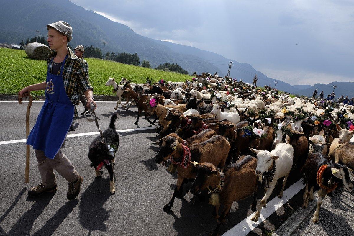Vieni a vivere la Desmontegada in Trentino