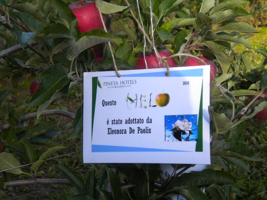 Il cartello che evidenzia il melo adottato, qui una pianta di Red