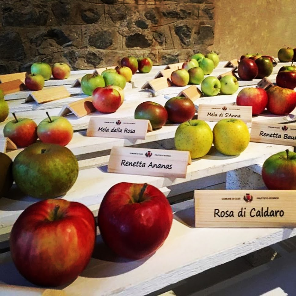 In Val di Non mele di tutti i tipi, storiche e meno famose, gustose e croccanti ideali per cucinare