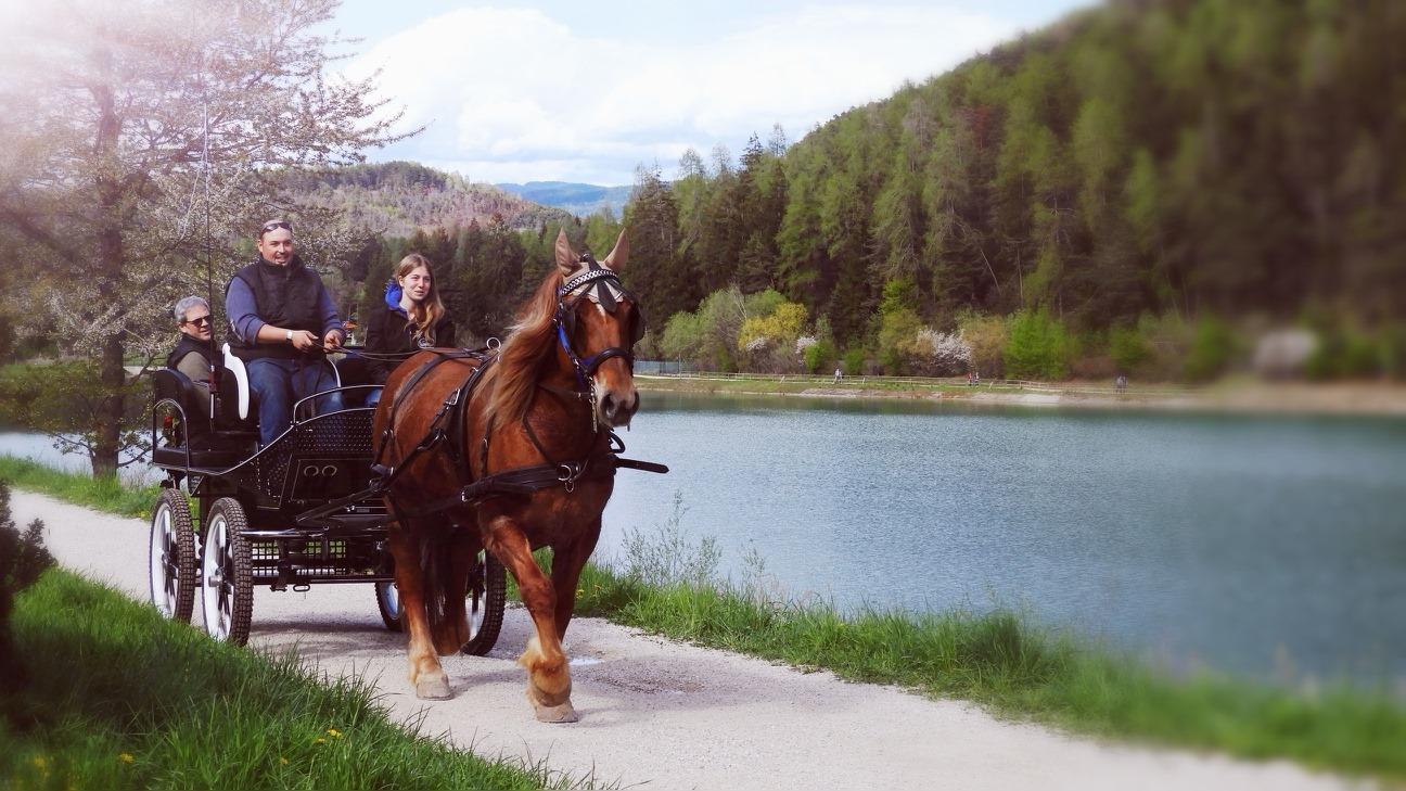 Family trip in carrozza a cavallo