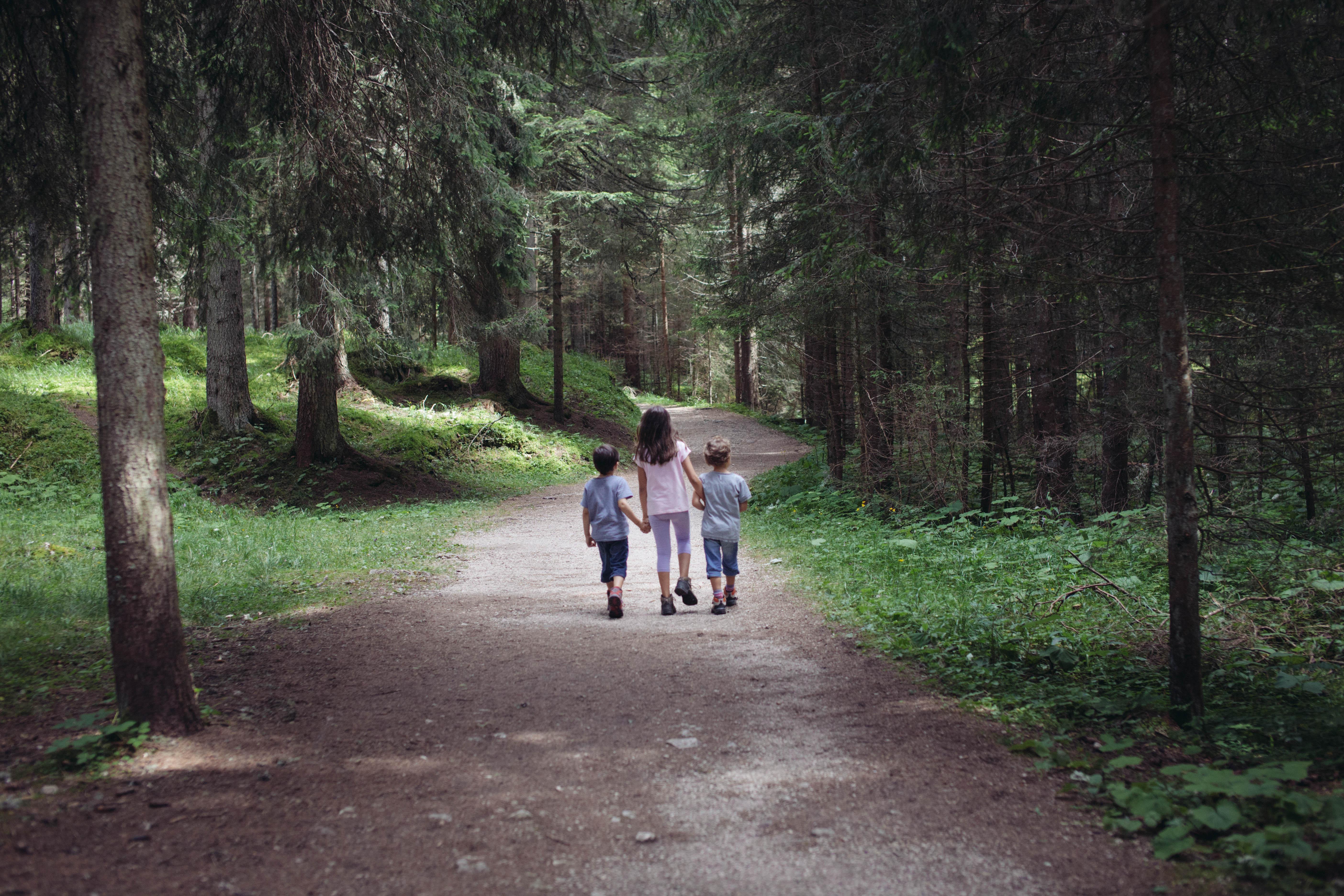 A spasso con gli amici nel bosco. Pineta family holiday