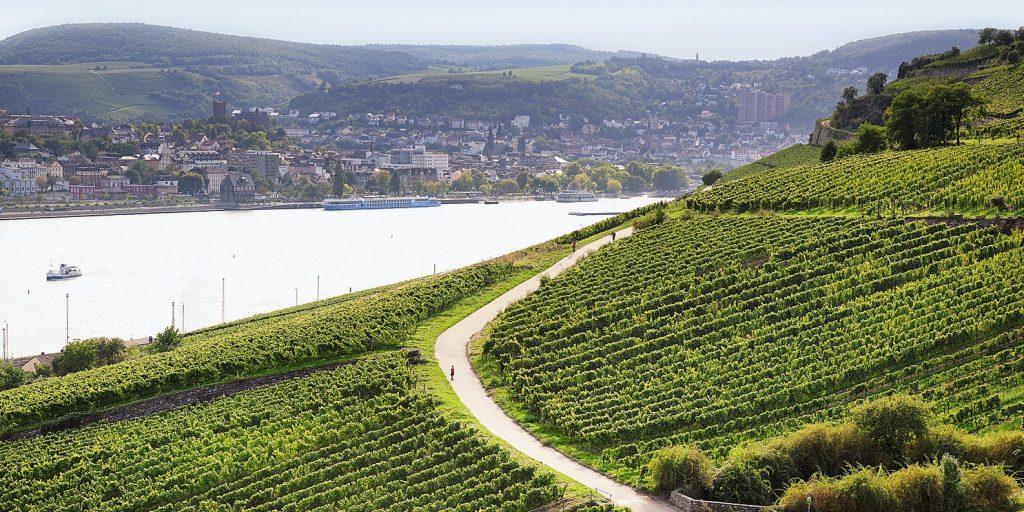 Riesling vino enoteca Trentino