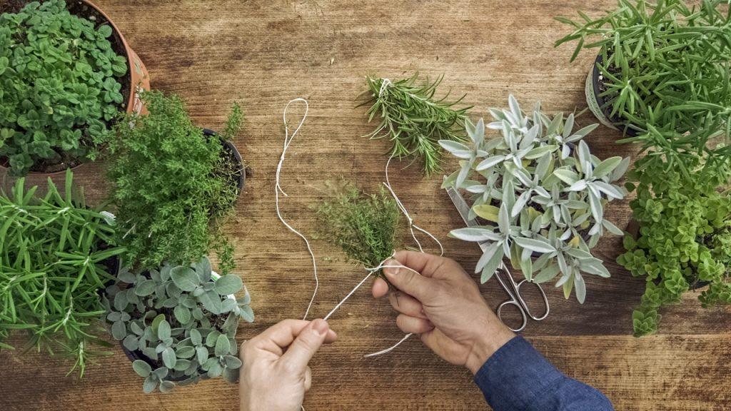 essicazione-erbe aromatiche-pineta-trentino