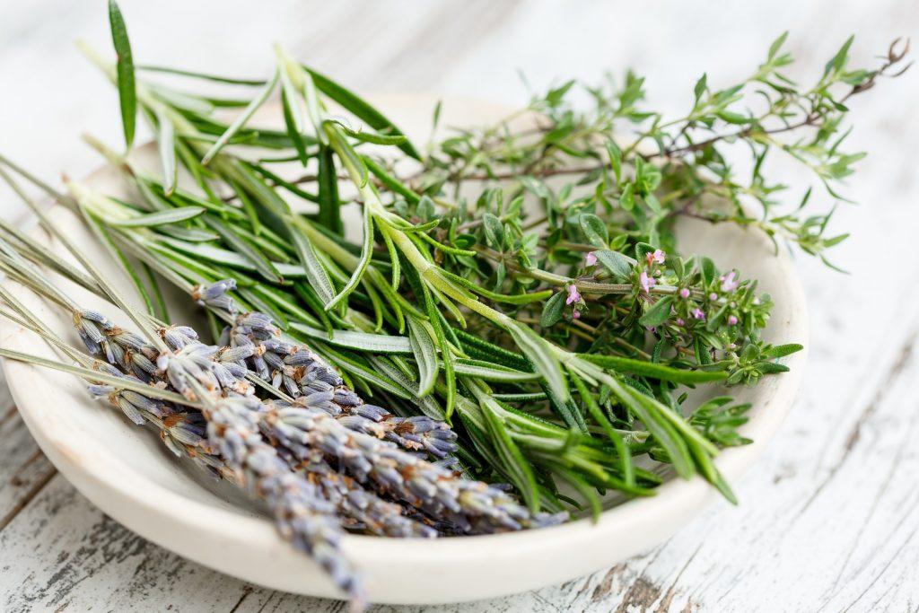 essiccare-erbe-aromatiche-pineta-orto-botanico