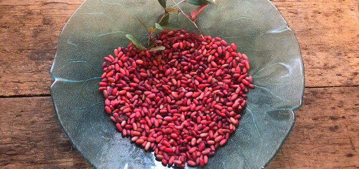 crespino-vulgaris