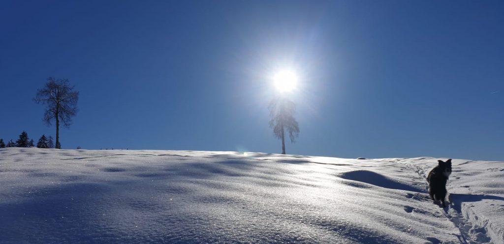 CAmminare sui sentieri della val di non con la neve