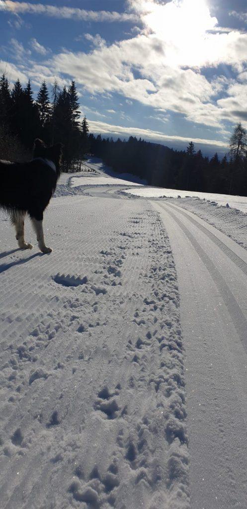 slittare-fondo-proves-cane