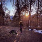 Ridurre-stress-bosco- camminate- trattamenti