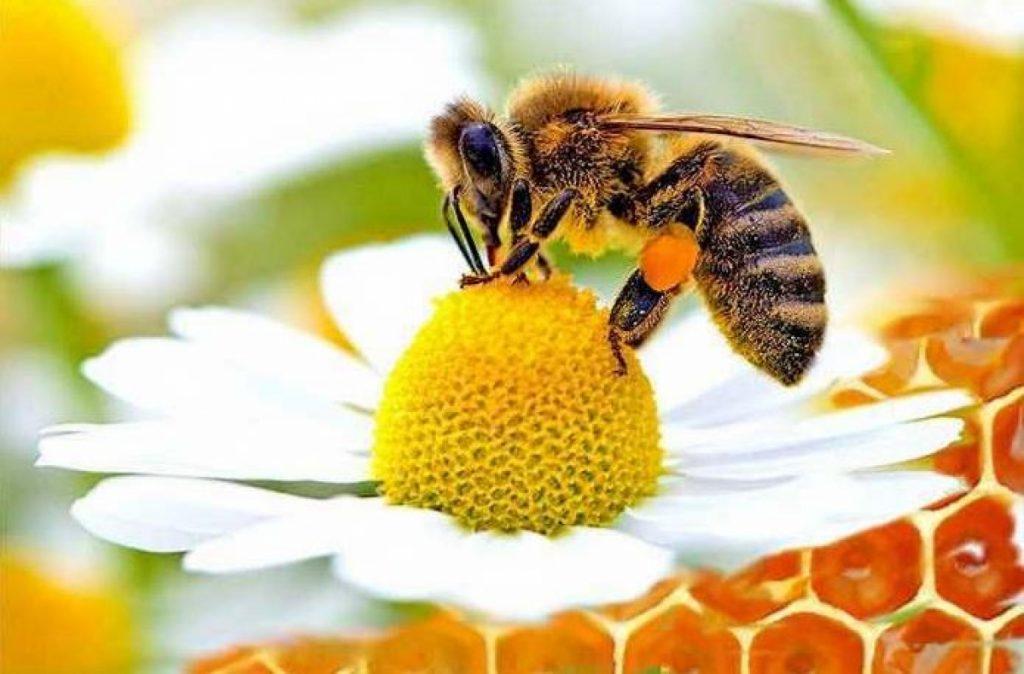 gioranta-mondiale-api-trentino